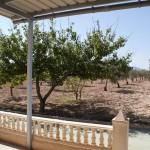 Casa campo en camino del Prado - Pinoso 14